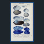 "blue seashells vintage botanical French ocean art Poster<br><div class=""desc"">Perfect for the lake house, or anyplace you want to be reminded of the sea, this elegant vintage botanical print is taken from an old French zoology book. A row of shells, all tinted blue, are surrounded by French writing. This drawing is the second of a set of two -...</div>"