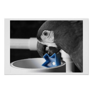 Blue - Severe Macaw Poster