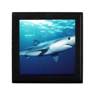Blue Shark Gift Box