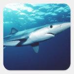 Blue Shark Square Sticker