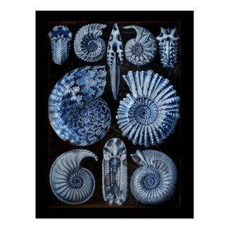 Blue Shells Postcard
