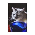 Blue Siamese Gallery Wrap Canvas
