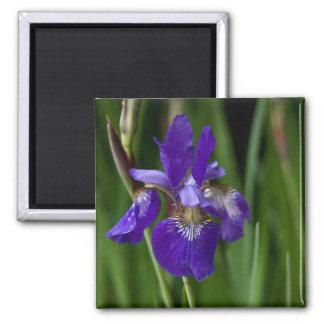 Blue Siberian Iris Fridge Magnets