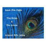 Blue Single Peacock Feather Save the Date Postcard