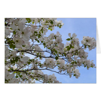 Blue Skies and Dogwood Flowers Card