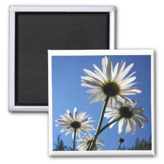 Blue Skies Bloomin Daisies Fridge Magnet