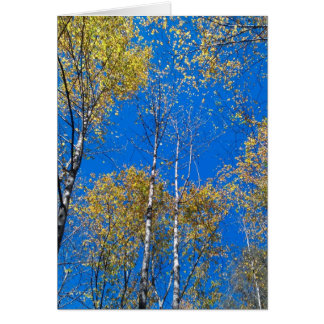 Blue Sky and Poplars Cards