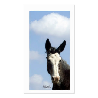 Blue Sky and Roan Bald Face Mule Business Card Templates