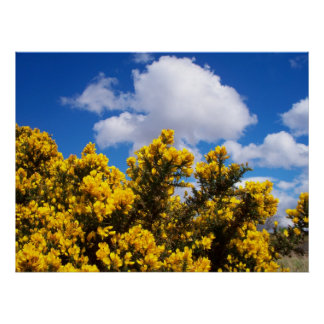 Blue sky behind bright yellow flowers poster