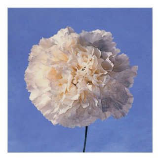 blue.sky~carnation-white poster