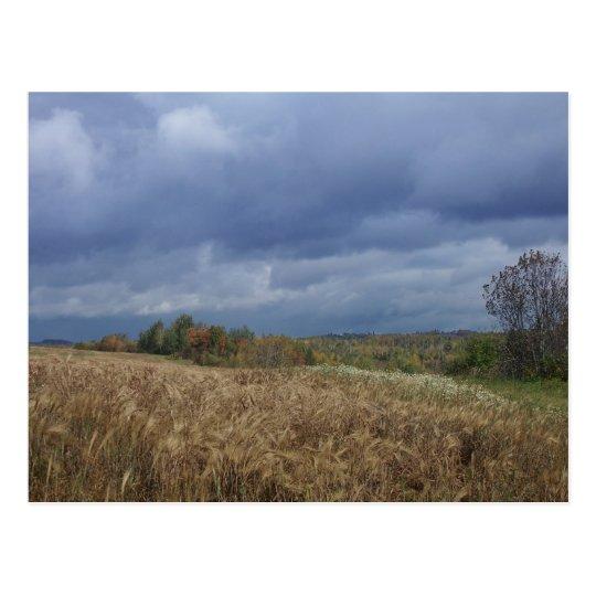 Blue Sky Farm Postcard