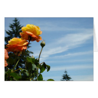 Blue Sky Greeting Cards Summer Rose Garden