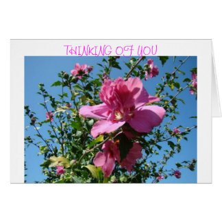 Blue Sky & Rose Of Sharon Card