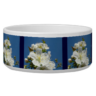 Blue Sky Spring Cherry Blossoms Dog water bowl