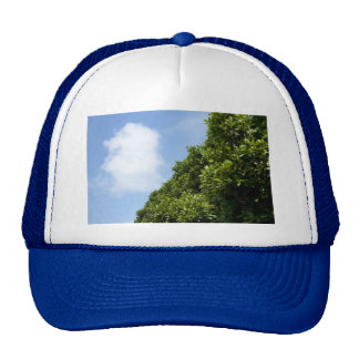 Blue sky with white cloud and green foliage trucker hat