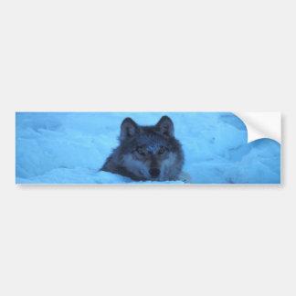 Blue Snow Timber Wolf Bumper Sticker