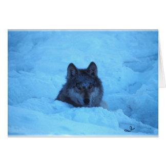 Blue Snow Timber Wolf Card