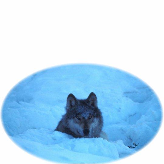 Blue Snow Timber Wolf Photo Sculpture