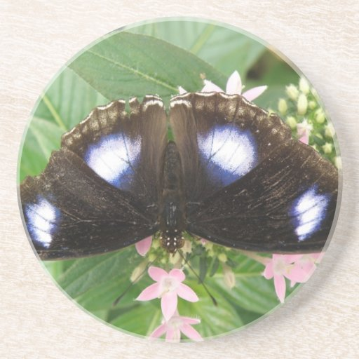 Blue Spotted Butterfly Coasters