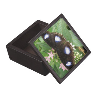 Blue Spotted Butterfly Gift Box