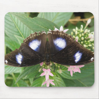 Blue Spotted Butterfly Mousepad