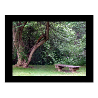 Blue Spruce Park #3 Postcard