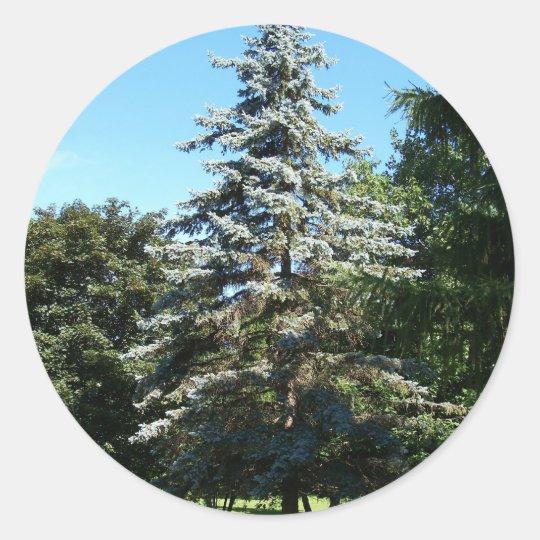 Blue Spruce Stickers