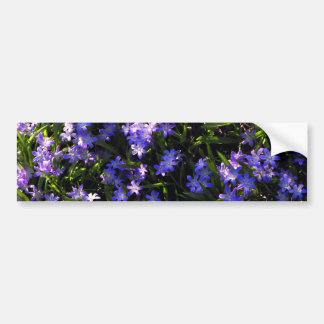 Blue Squill Spring Flowers Bumper Sticker