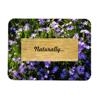 Blue Squill Spring Flowers Magnet