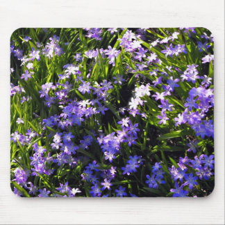 Blue Squill Spring Flowers Mouse Pad