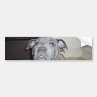 Blue_Staffordshire_Bull_Terrier_Puppy, Bumper Stkr Bumper Stickers