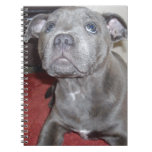 Blue_Staffordshire_Bull_Terrier_Puppy, Cuaderno