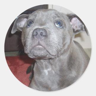 Blue_Staffordshire_Bull_Terrier_Puppy_Sticker. Classic Round Sticker