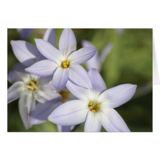 Blue Star Flowers Card