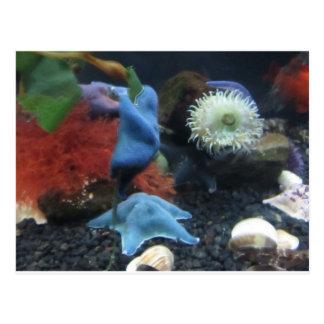 Blue Starfish Anemones Postcard