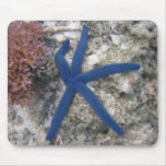 Blue Starfish Resting By Coral Mouse Pad
