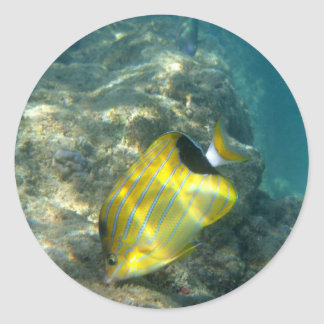 Blue-striped Butterflyfish Classic Round Sticker