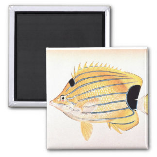 Blue-Striped Butterflyfish Magnet