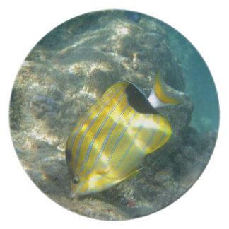 Blue-striped Butterflyfish Plate