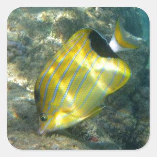 Blue-striped Butterflyfish Square Sticker