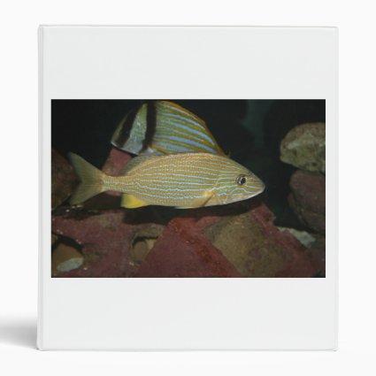 blue striped yellow fish saltwater animal 3 ring binder