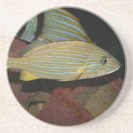 blue striped yellow fish saltwater animal coasters
