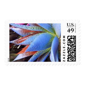Blue Succulent Postage Stamp