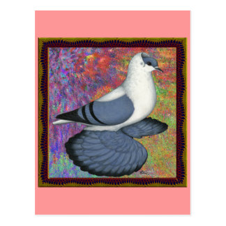Blue Swallow Pigeon Framed Postcard