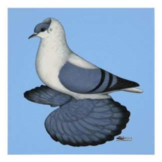 Blue Swallow Pigeon Posters