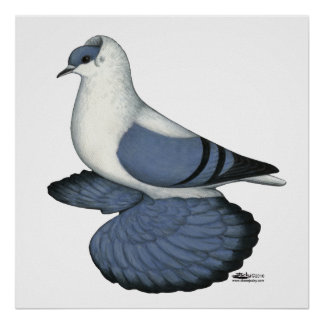 Blue Swallow Pigeon Print