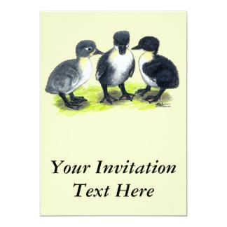 Blue Swedish Ducklings Card