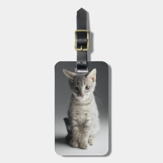 Blue Tabby Kitten Luggage Tag