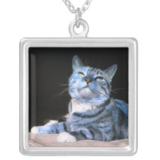 Blue Tabby Kitty necklace