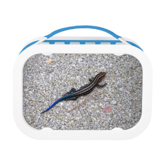 Blue Tailed Skink Lunch Box